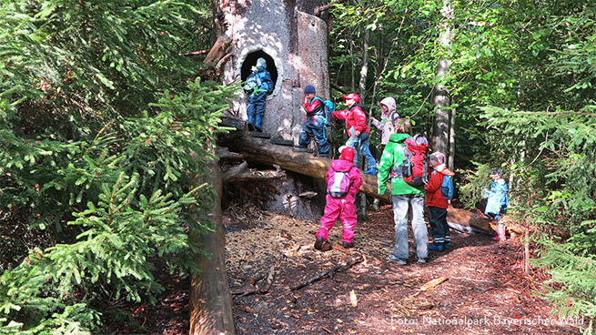 We offer children's birthday parties, for example, in the forest playground near Spiegelau.