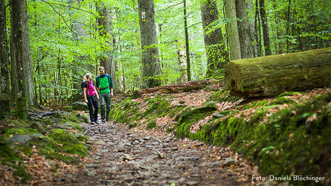 In some areas, like at Mittelsteighütte, one can experience remains of native forest areas.