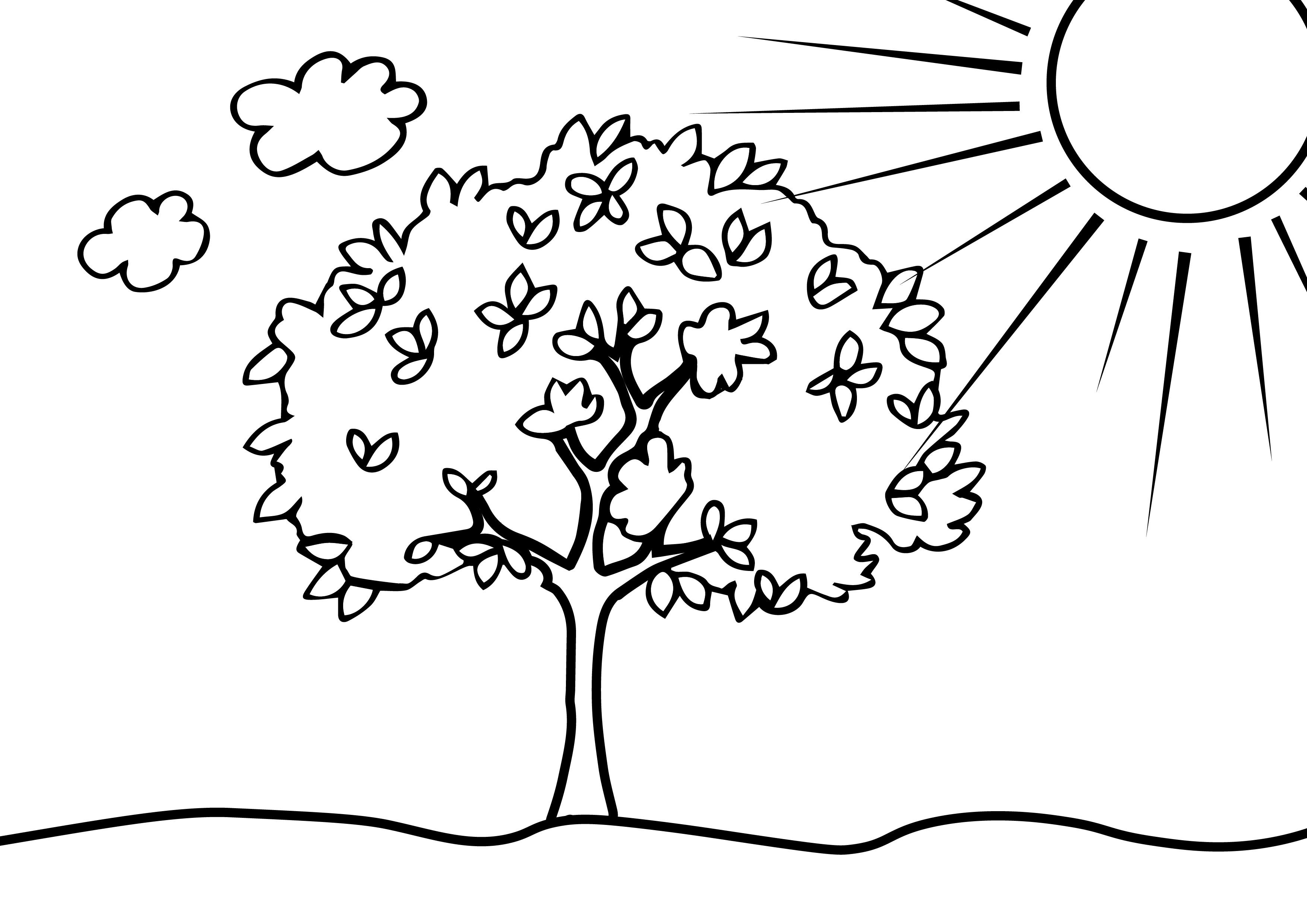 Rätselblatt zur Fotosynthese
