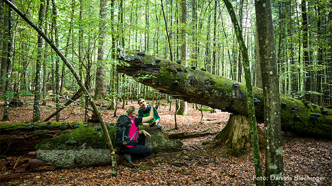At Mittelsteighütte, one of our primeval forest remnants, you can experience pure wild nature.